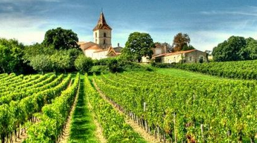 Three Things to Do in a French Wine Tour