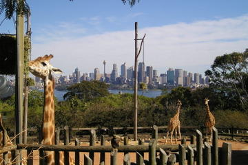Sydney: The Best Attractions to Experience in the Harbour City
