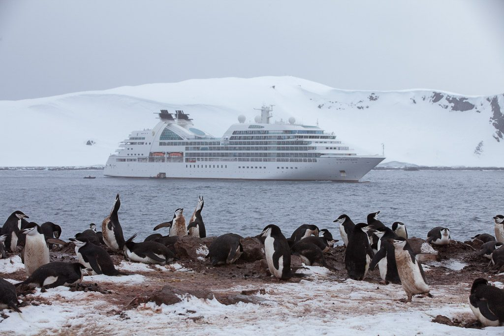 penguin cruise